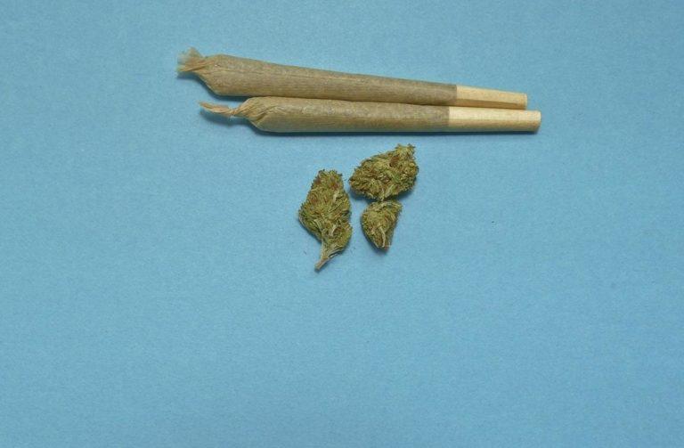 Nasiona marihuany feminizowane a niefeminizowane